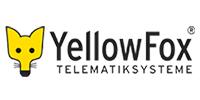 yellowfox-kl